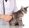 Ветеринарные клиники в Иванищах